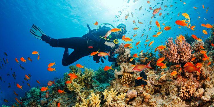 Scuba-Diver---stock-photo