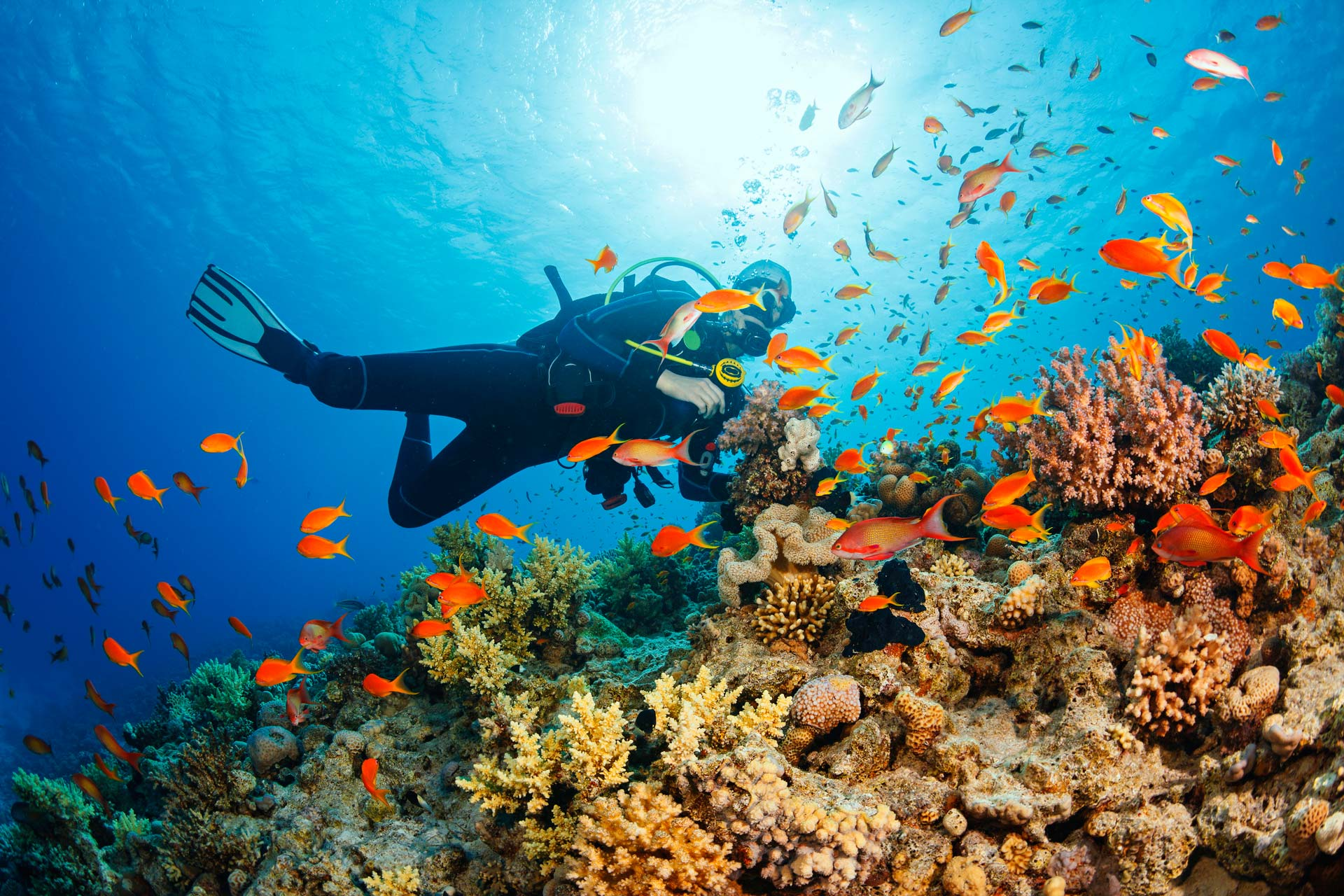 scuba diver under water by reef with colorful fish
